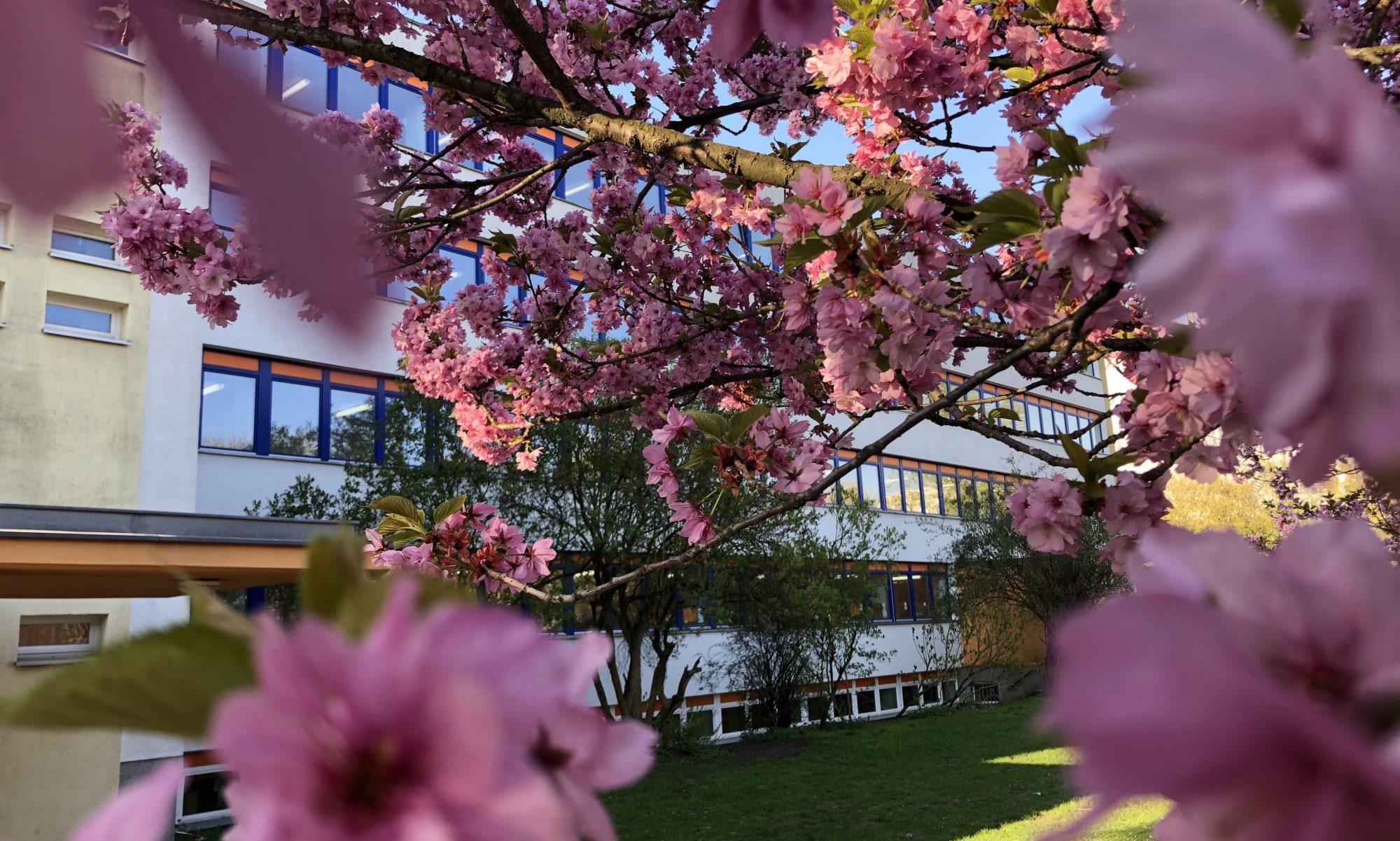Grundschule im Blumenviertel